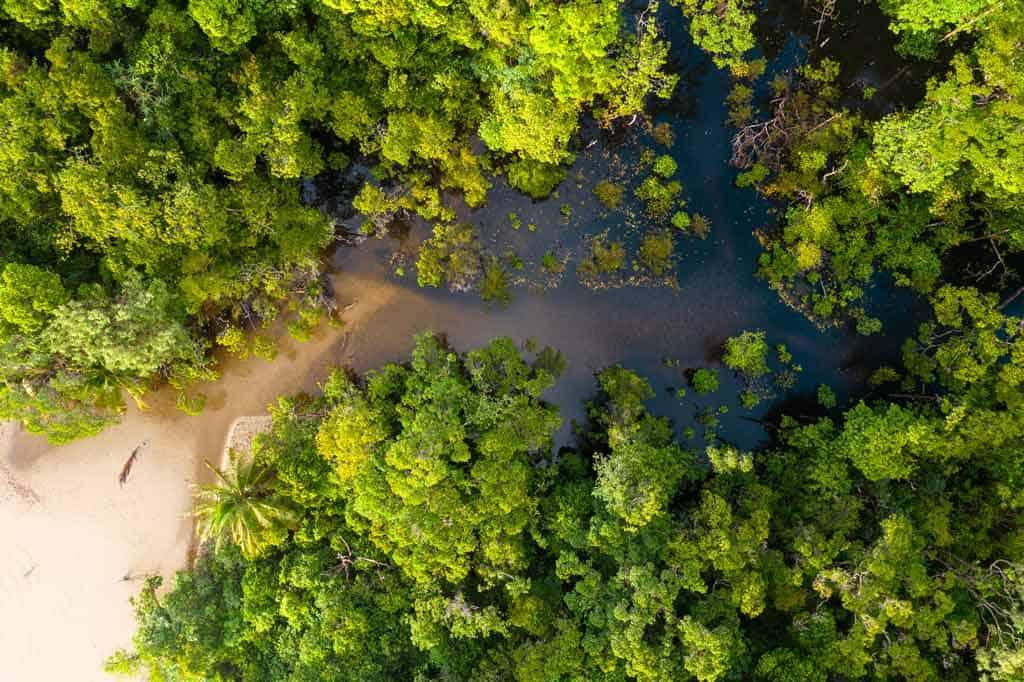 Jungle Cape Tribulation
