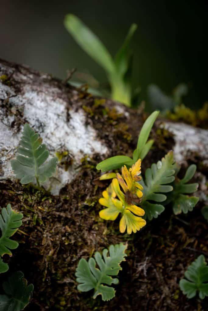 Ferns Mossman Gorge