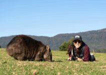Episode 4 – Looking for Wombats in Bendeela | Van Life Australia Vlog