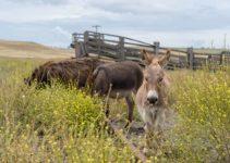 Episode 6 – Miniature Donkeys on the Sapphire Coast | Van LIfe Australia Vlog