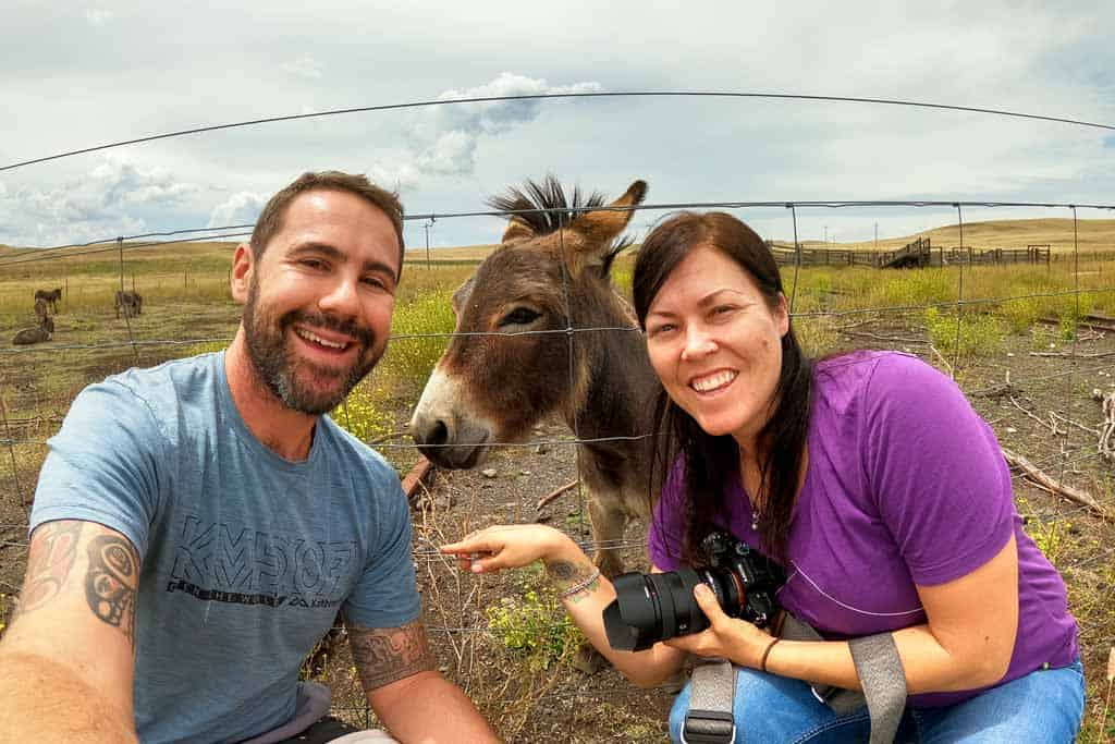 Us Miniature Donkeys
